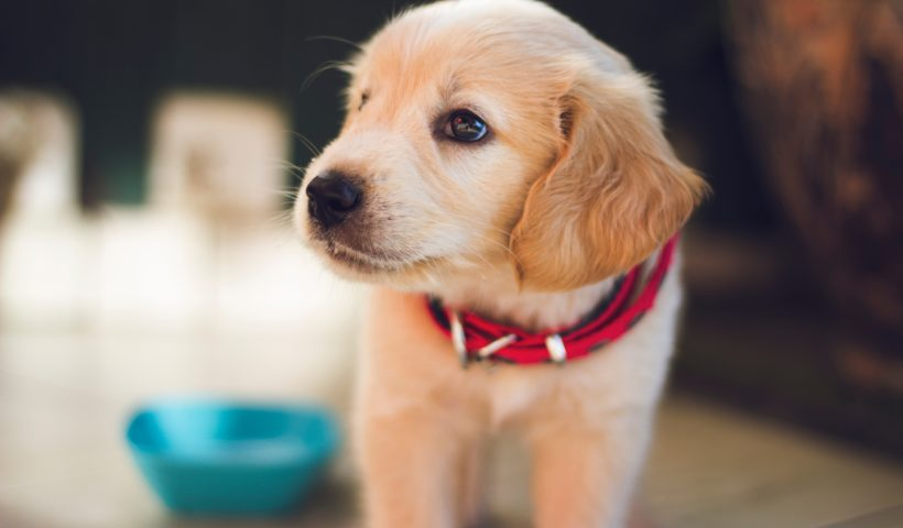 signs of an unhealthy animal pet health